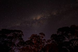 Milkyway in the Bush