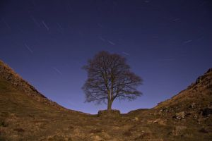 Sycamore Gap Startrails