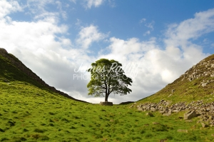 james-ratliff-photography-sycamore-gap2